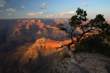 the grand canyon, grand canyon, grand, canyon, sunset, arizona, tree,