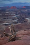 canyonlands national park, canyonlands, utah, green river overlook, desert, sunrise,