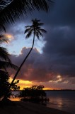 kindred spirit, rio grande, puerto rico, pr, coco beach, setting sun, sunset, tree, couds,