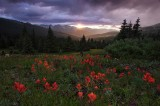 indian paintbrush, breckenridge, colorado, co, white river national forest, wildflowers,  wild flowers, sunset, sun, mou
