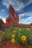 arches national park, flowers, the organ, courthouse towers, spring, landscape