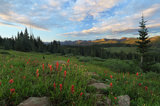 shrine pass, colorado, indian paintbrush, sunset, mountains, summer,