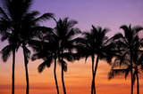 palm tree, silhouette, sunset, hawaii, oahu, sky,