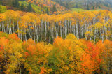 mcclure pass, aspens, trees, gunnison national forest, colors, fall, september