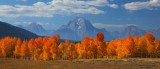 peak, mt moran, moran, grand teton national park, wyoming, teton, tetons, aspen, aspens, fall, october, panorama