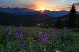 light, boreas pass, breckenridge, colorado, breck, boreas, pass, co, wildflowers, flowers, mountain, light, peak 8, peak