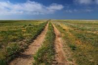 prairie, pawnee, pawnee grasslands, colorado, co, wildlife, burrowing owls, badgers, pronghorn, prairie dogs, beautiful,