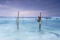 sri lanka, sri lankan, stilt fisherman, stick fisherman, fishermen, fisherman, stilt stick,