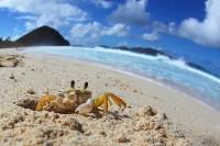 Trip Report: Caribbean