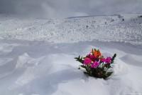 Loveland Pass Avalanche
