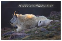 Free Mother's Day E-Cards!