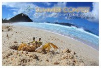 Summer Print Giveaway!