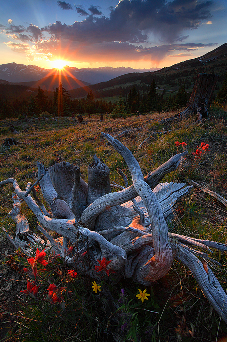 sunset, boreas pass, colorado, breckenridge, flowers, flower, sun, ten mile range, wildflowers, wildflower, , photo