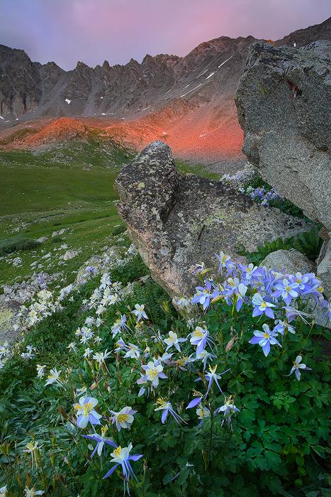 mayflower gulch, mayflower, gulch, colorado, sunset, blue columbine, columbines, columbine, blue columbines, , photo