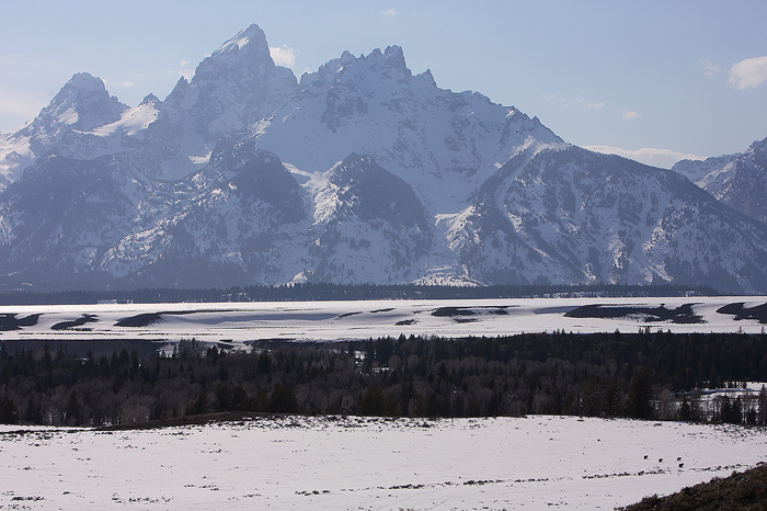 grizzly bears, grizzly bear, ursus arctos, grizzly, grizzlies, bear, bears, grand teton national park, wyoming, tetons, , photo