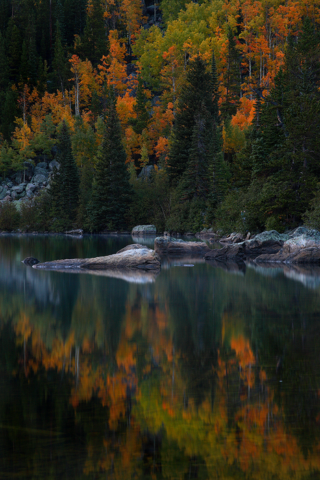 An aspen grove ranging in color from green to orange is reflected in the still evening waters of Bear Lake in Rocky Mountain...