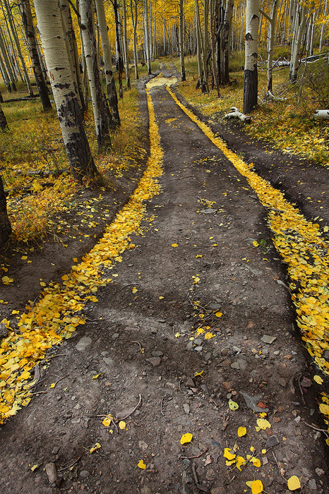 On a very windy october day in the San Juan Mountains, I stumbled upon this amazing little road that had been blown clear of...