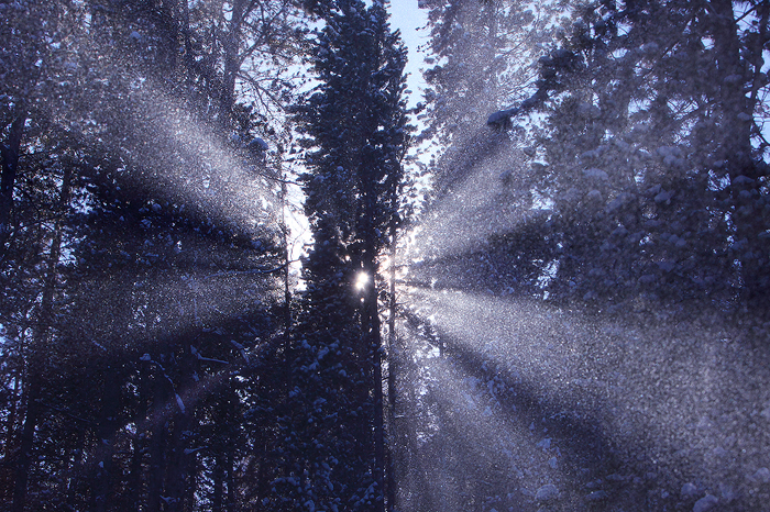 forest, cathedral, white river national forest, colorado, co, light, snowshoeing, temperature, snow, ice, beams, pine, m, photo