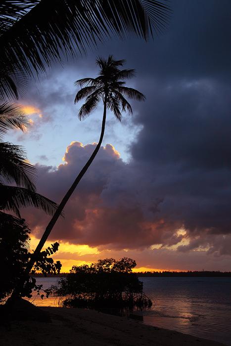 kindred spirit, rio grande, puerto rico, pr, coco beach, setting sun, sunset, tree, couds, , photo