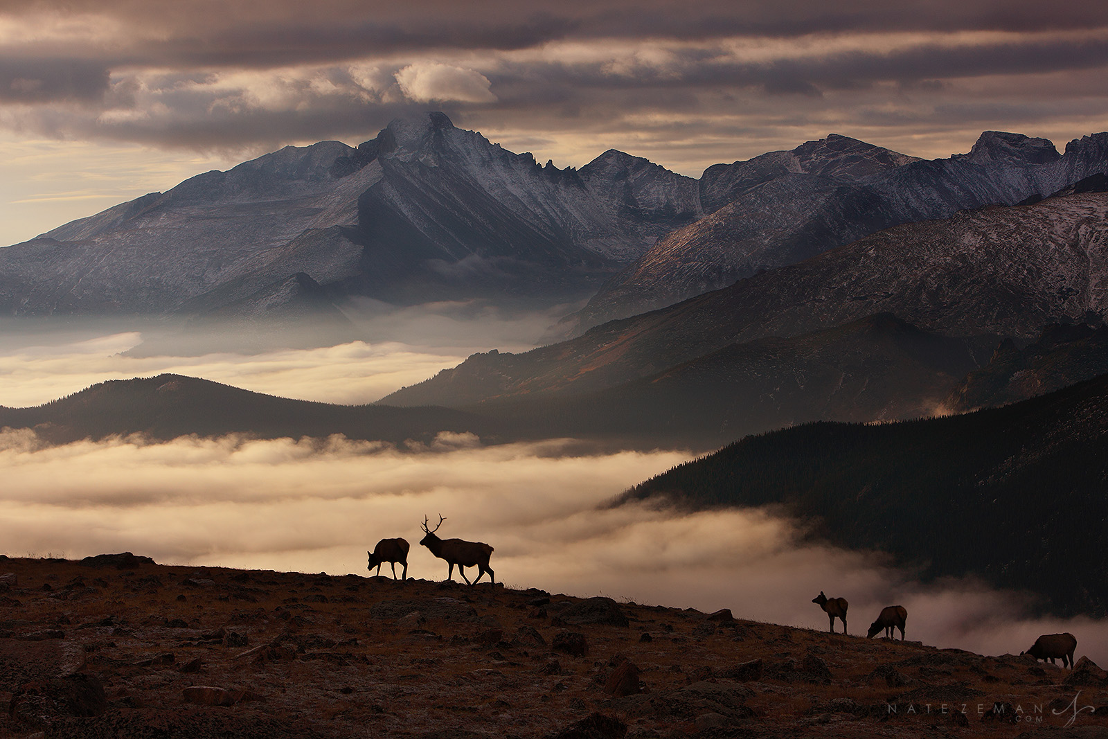 winter, dawn, sunrise, elk, rocky mountain national park, colorado, co, clouds, temperature inversion, fourteeners, bull, photo