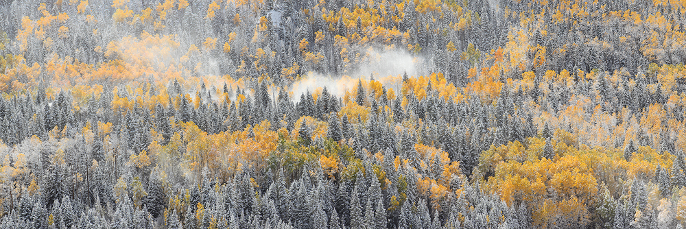 autumn, fall, wind, winds, snow, pine, tree, tree, aspen, aspens, colorado, co, fresh, panorama, panoramic, pano, photo