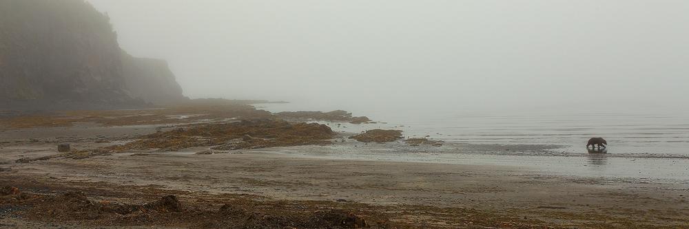 katmai, national , park, alaska, ak, peninsula, alaskan, brown, bear, ursus, arctos, foggy, panorama, ocean, photo