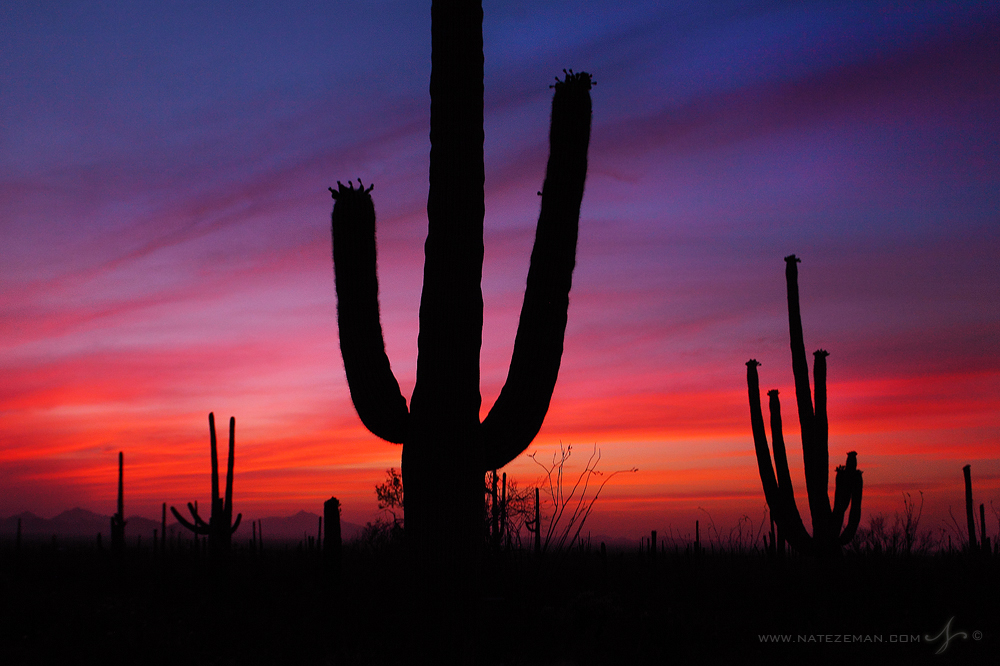 saguaro, national park, arizona, az, sunset, sky, shape, desert, sonoran, southwest, cactus, photo