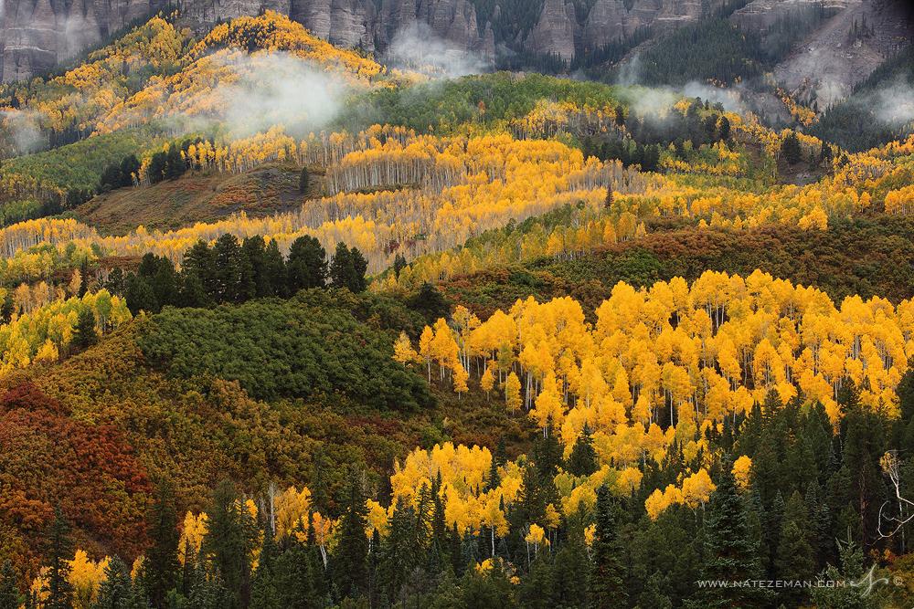 Owl creek pass, colorado, co, fall, colors, color, aspen, trees, yellow, gold, autumn, photo
