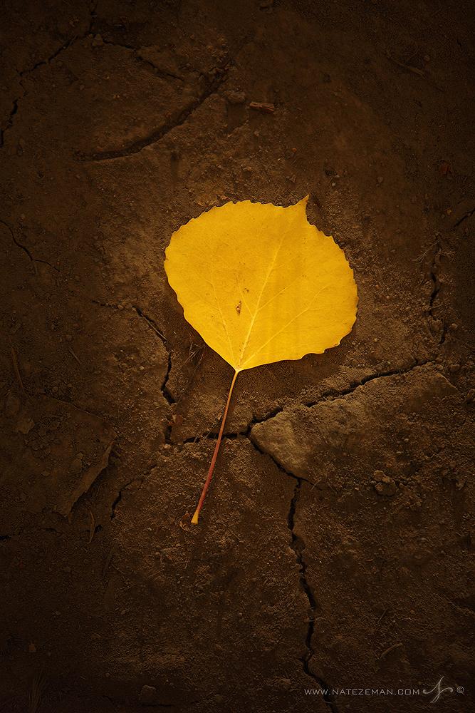 aspen leaf. uncompahgre national forest. san juan mountains, co, colorado, light, sunlight, forest, road, photo
