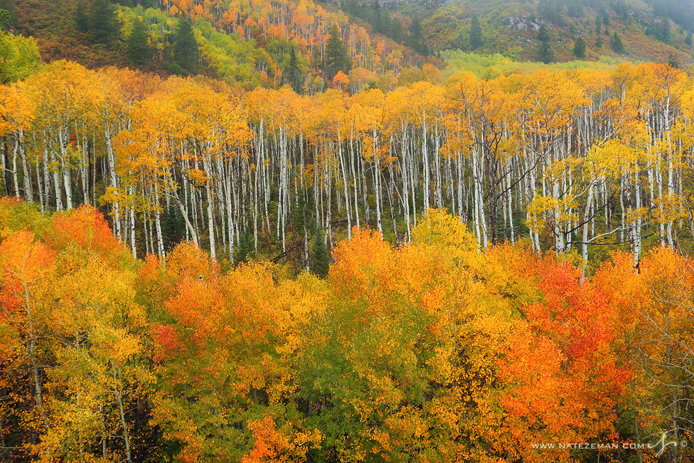 mcclure pass, aspens, trees, gunnison national forest, colors, fall, september, photo