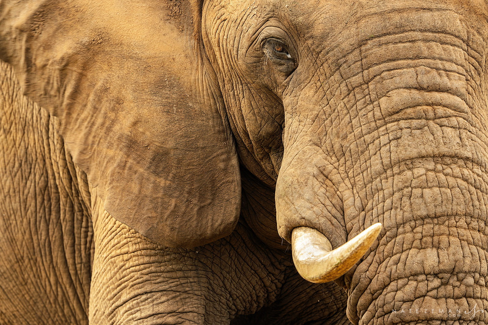 Staring eye to eye with the largest terrestrial animal on the planet has a special way of making you feel really small.