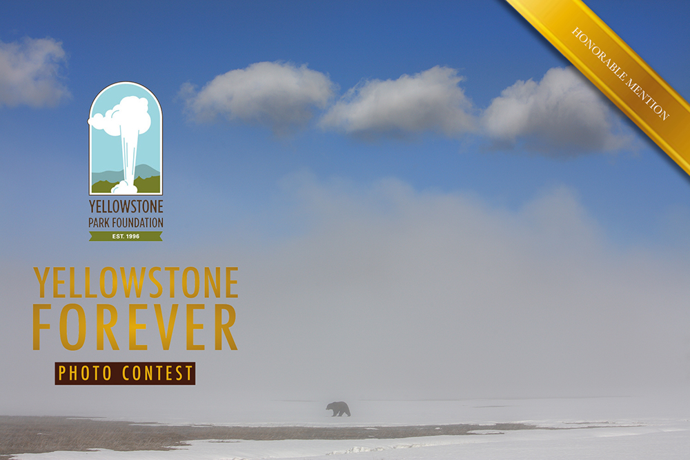 yellowstone forever, honorable mention, , photo