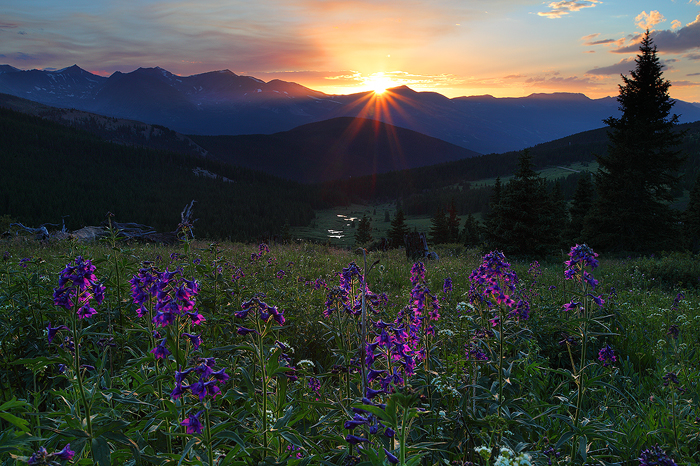 light, boreas pass, breckenridge, colorado, breck, boreas, pass, co, wildflowers, flowers, mountain, light, peak 8, peak, photo